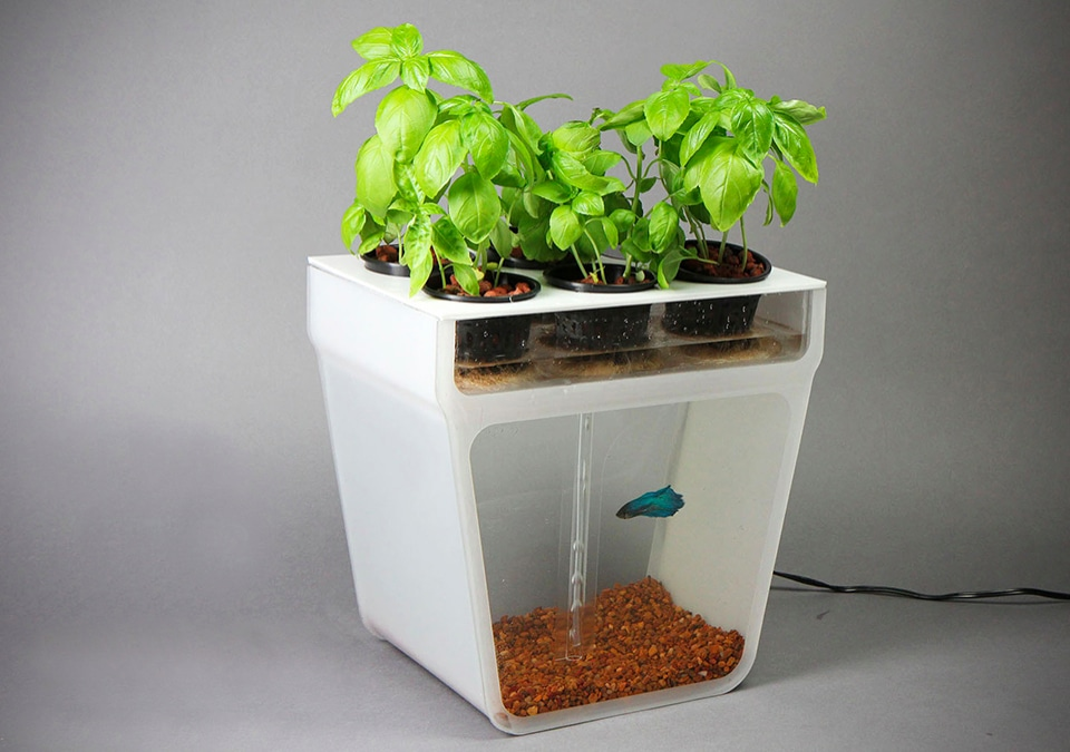 Grow Your Own Produce With A Home Aquaponics Garden Homestead