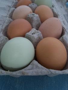 Dehydrate Eggs