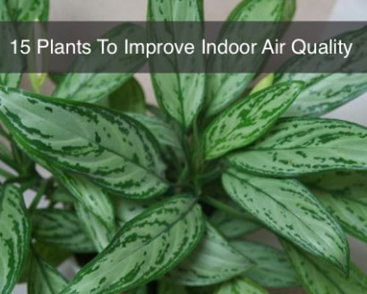 15-House-Plants-For-Improving-Indoor-Air-Quality