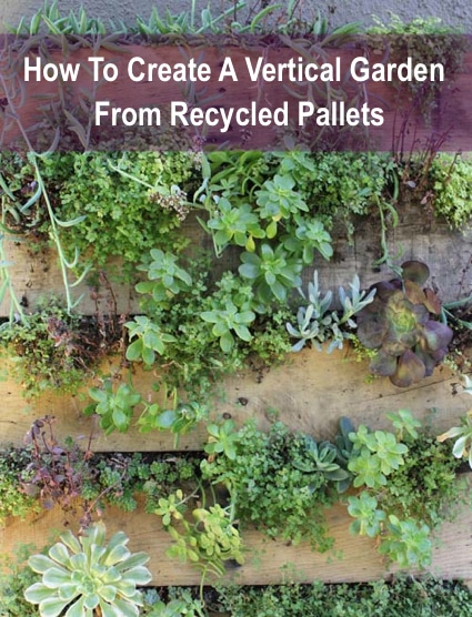 How to create a vertical garden from recycled pallets for How to make a vertical garden using pallets