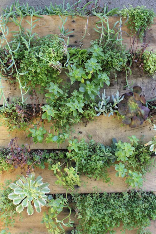 How To Create A Vertical Garden From Recycled Pallets — Homestead ...