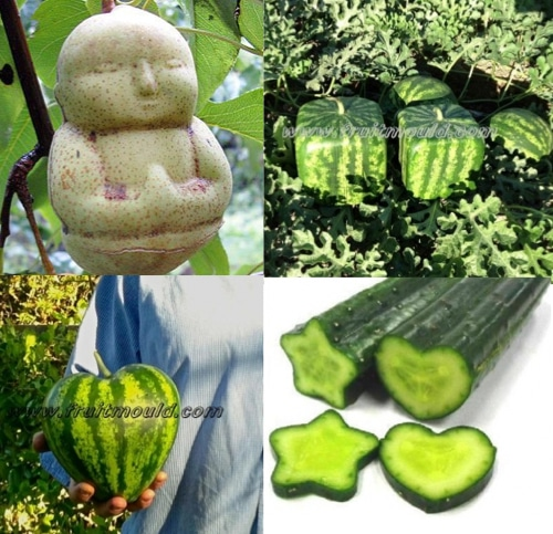 Grow Buddha Shaped Pears Square Shaped Watermelon Heart