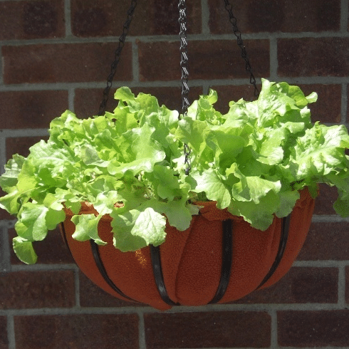 Grow Hanging Lettuce