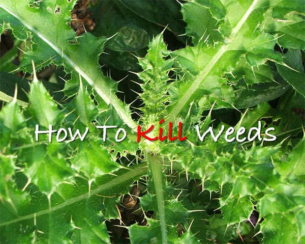How To Kill Weeds Easily