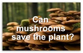 Mushrooms Can Save The Planet