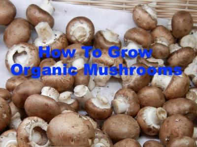 Crimini Mushrooms Organic