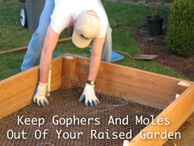 keep gophers and moles out of raised garden homestead survival