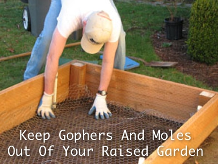 Keep Gophers And Moles Out Of Raised Garden
