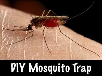 Mosquito Trap Homestead Survival