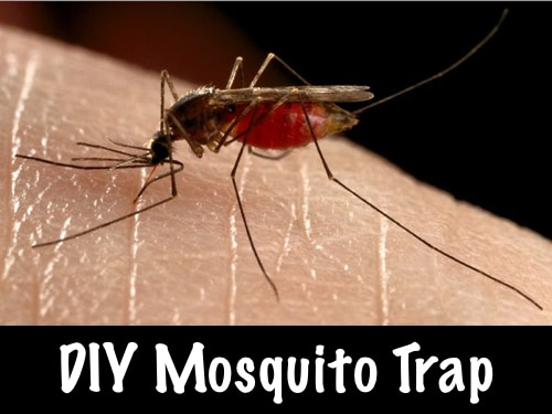 Easy DIY Mosquito Trap