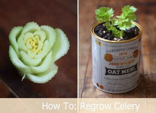 Regrow Celery From Stalk