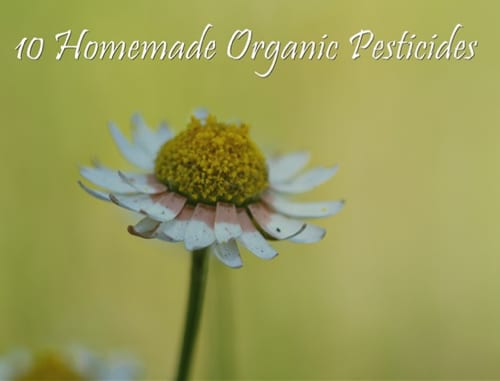 10 Homemade Natural Pesticides