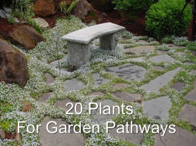20 Plants For Garden Pathways