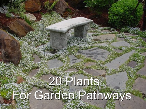 20 Plants For Garden Pathways