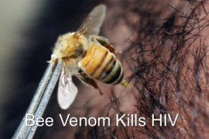 New Study Shows Bee Venom Kills HIV