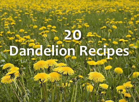20 Dandelion Recipes