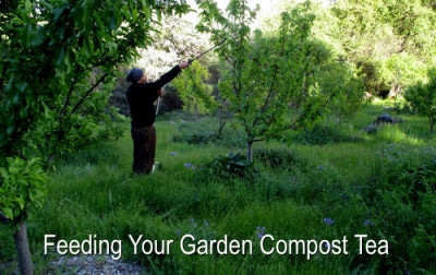 Growing A Garden With Compost Tea