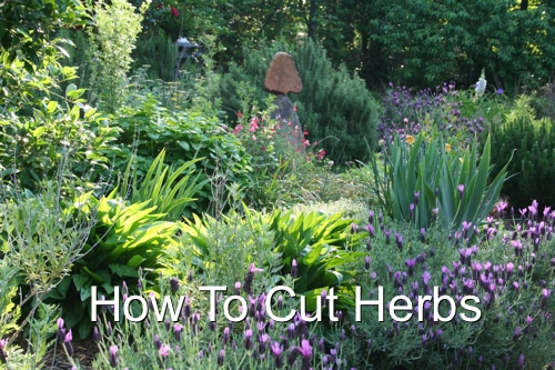 How To Cut Herbs
