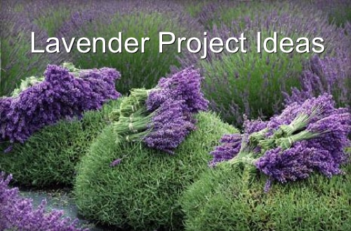 Lavender Project Ideas