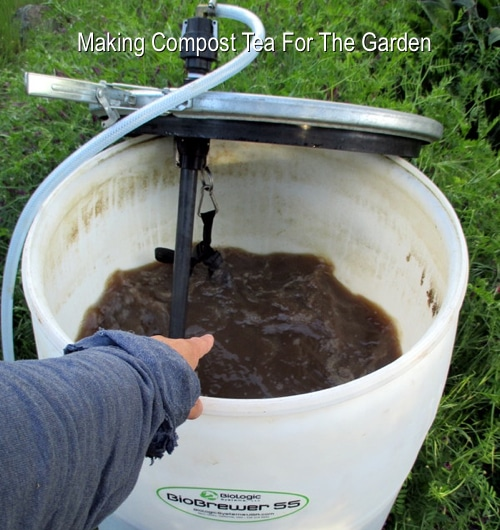 Making Compost Tea