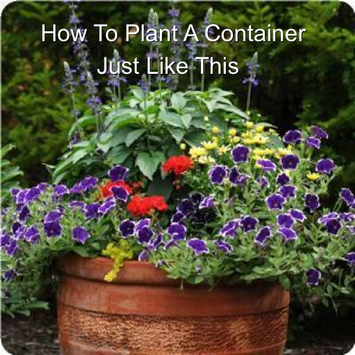 DIY Mixed Container Garden
