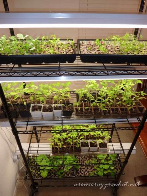 Seed Growing Rack