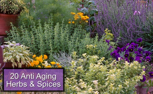 Top 20 Anti-Aging Herbs And Spices To Add To Your Diet