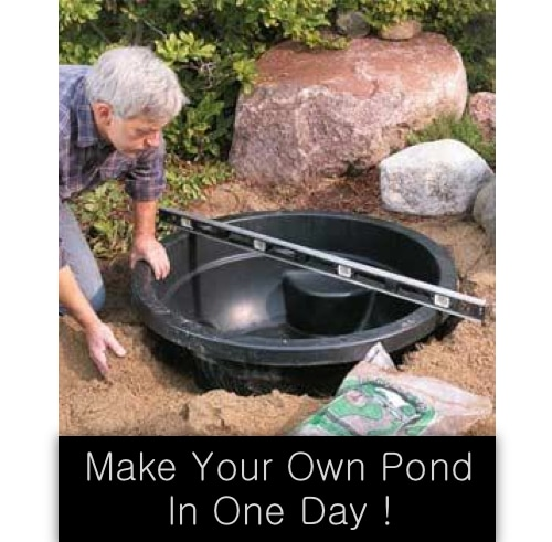 Build A Pond In One Day