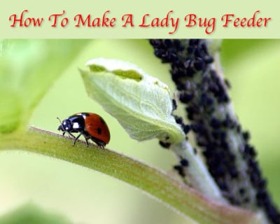How To Make A Ladybug Feeder