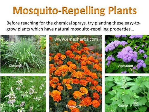 Plant These Plants Instead Of Using Monsanto