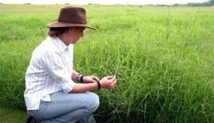 Genetically Modified Grass Begins Releasing Cyanide, Kills Texas Cattle