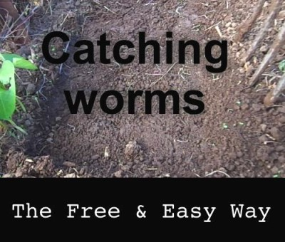 How-To-Catch-Worms-The-Free-And-Easy-Way
