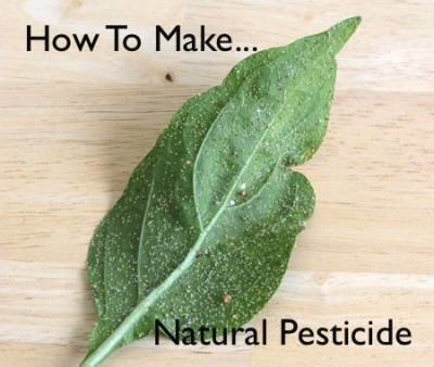 How-To-Make-A-Natural-Pesticide