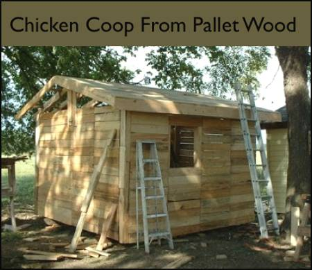 Make a backyard chicken coop from free pallets homestead for How to build a chicken coop from wooden pallets
