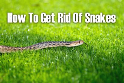 How-To-Get-Rid-Of-Snakes