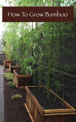 How-To-Grow-Bamboo