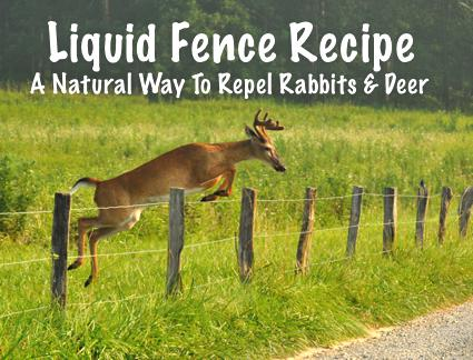 Liquid Fence Recipe: A Natural Way To Repel Rabbits And Deer