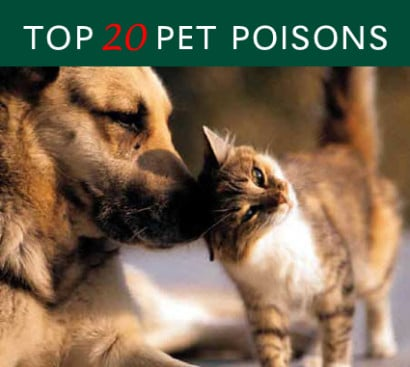 Top-20-Pet-Poisons-1