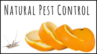 Kill-Them-With-Kindness-Natural Pest-Control