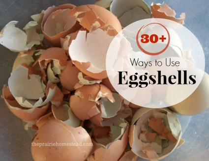 30 Things To Do With Eggshells