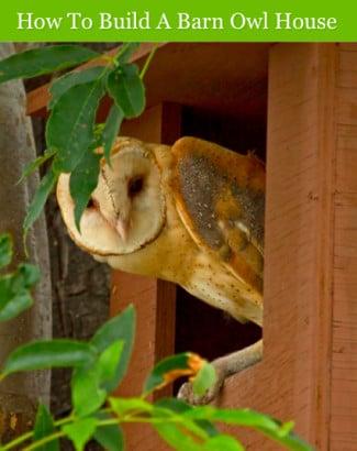How-To-Build-A-Barn-Owl-House