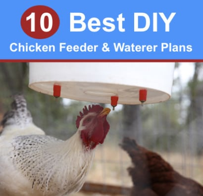 10-Best-DIY-Chicken-Feeder-And-Waterer-Plans-And-Ideas