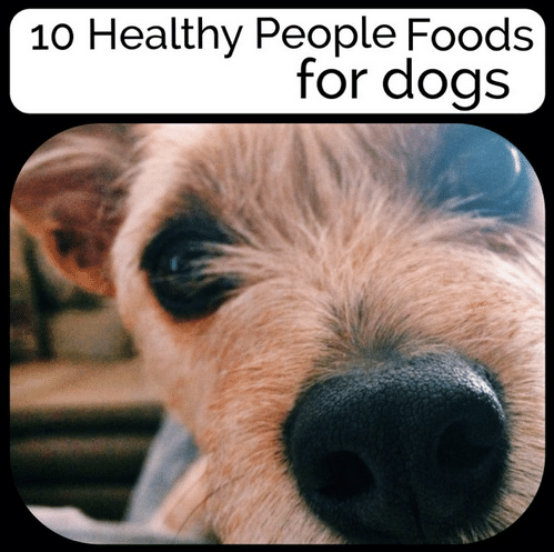 10 People Food Good For Dogs