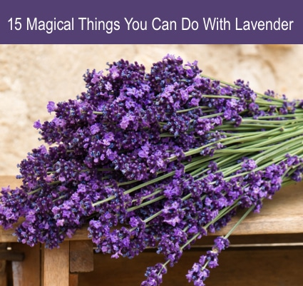 15 Magical Things You Can Do With Lavender