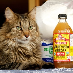 5 Natural Flea Treatments For Cats