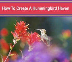 How To Create A Hummingbird Haven