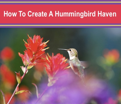 How To Create A Hummingbird Haven