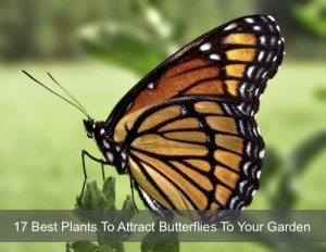 17 Best Plants To Attract Butterflies To Your Garden