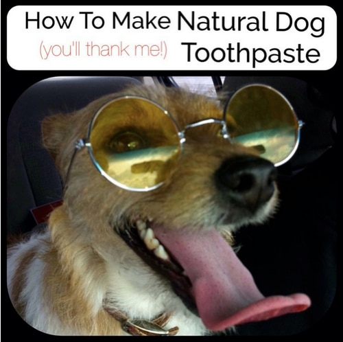 Canine Teeth Cleaning : At home dog teeth cleaning recipe instructions