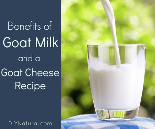 Benefits Of Goat Milk & A Goat Milk Cheese Recipe